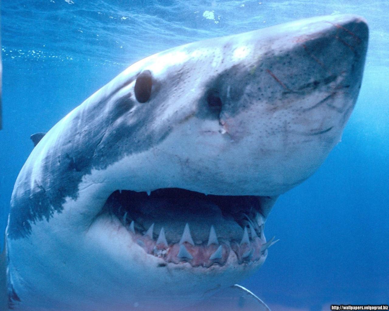 Las 5 extinciones en masa causas especies extintas y en for Immagini squali da stampare